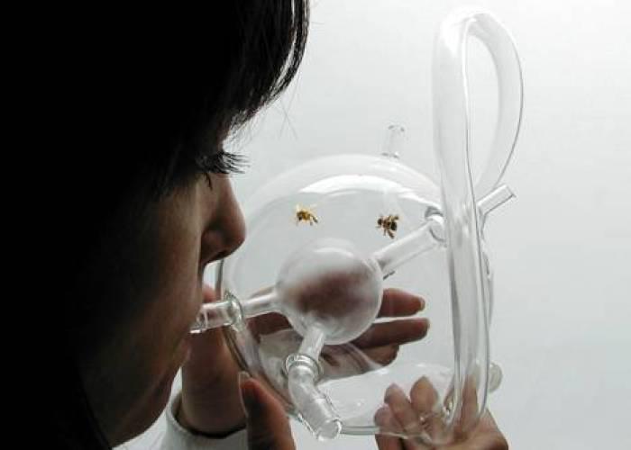 Dezeen_Susana_Soares_Bees cancer