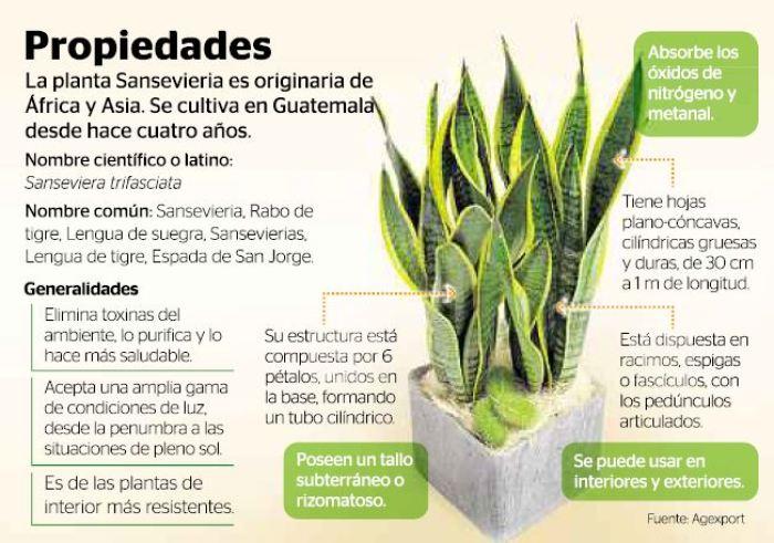 10 plantas que purifican el aire de tu casa for Cuales son las plantas para interiores