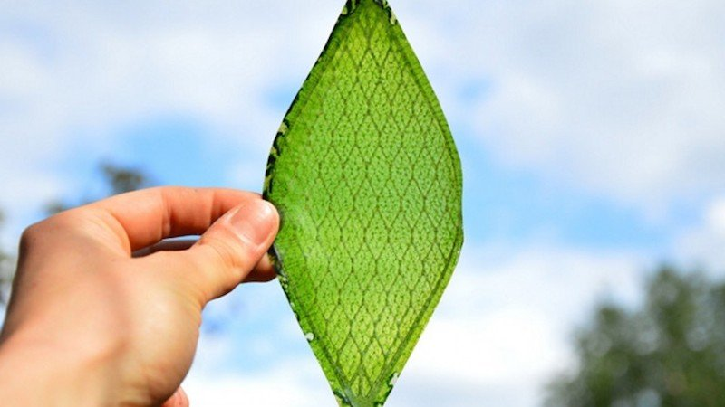 Silk-Leaf-b1