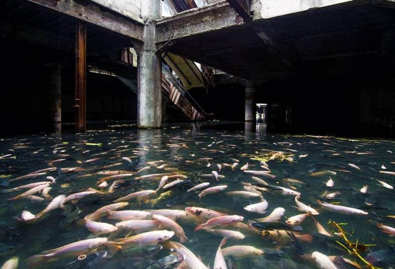 Centro comercial abandonado en Bangkok convertido en Acuario natural