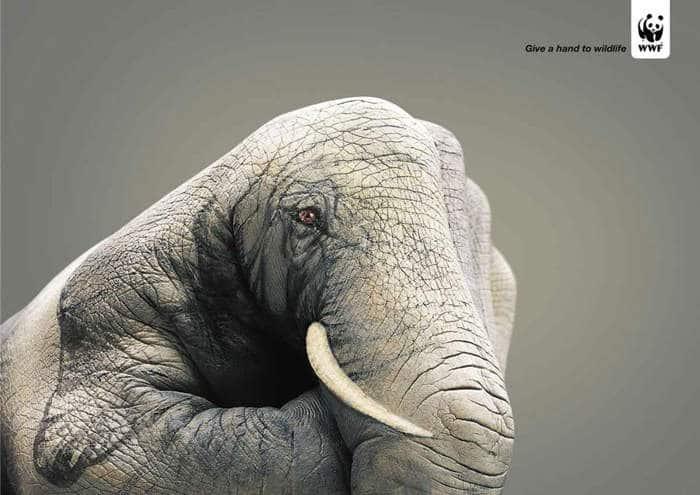 Dale la mano a la fauna