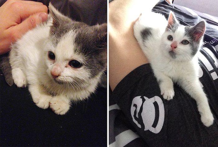 Little Stray Kitten