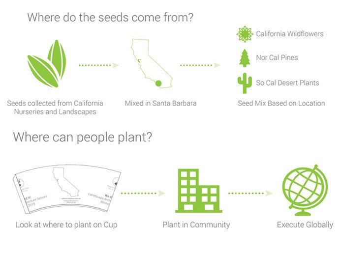 Taza de cafe biodegradable tipos de semillas