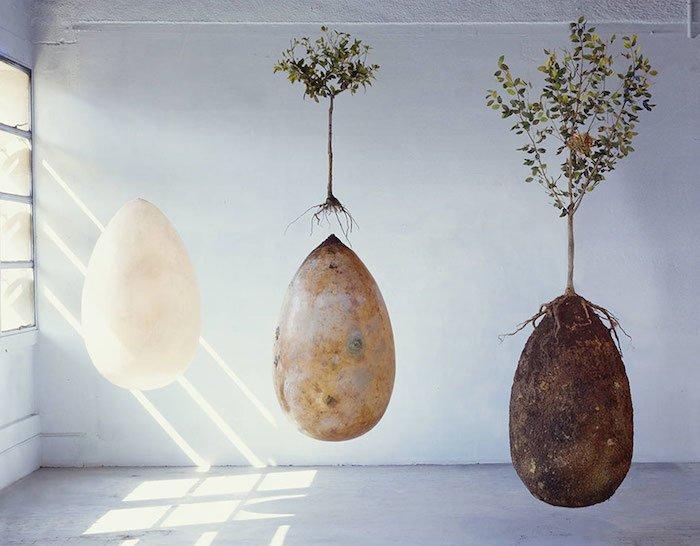 Entierros orgánicos convertirán a tus seres queridos en árboles