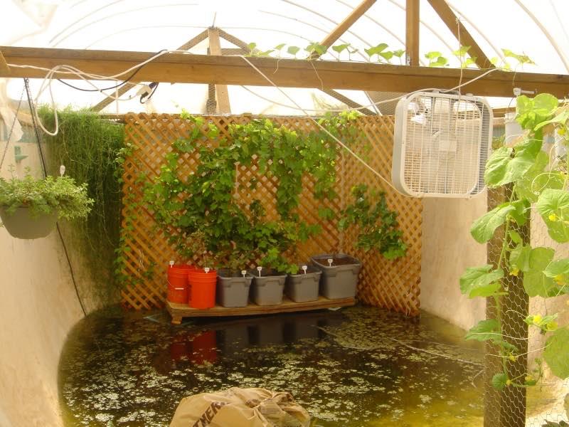huerto-piscina-estanque