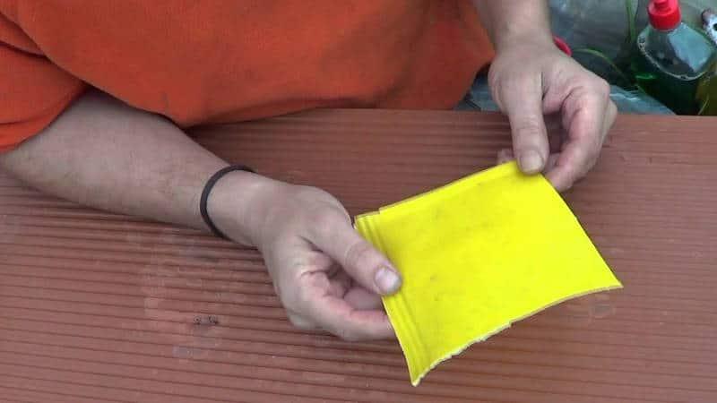 Como hacer trampas cromáticas para combatir la mosca blanca1