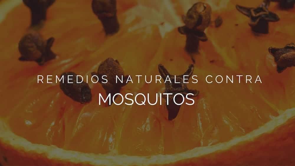 Remedios naturales contra mosquitos