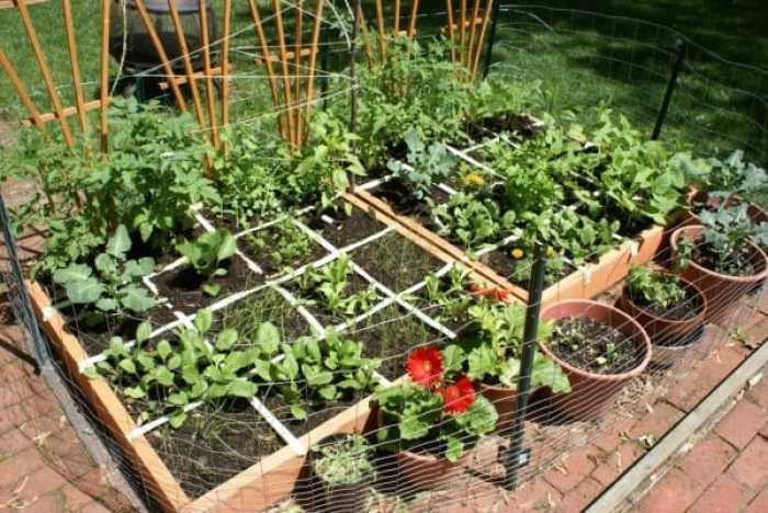 El huerto de un metro cuadrado for 5 cultivos faciles para empezar un huerto en casa