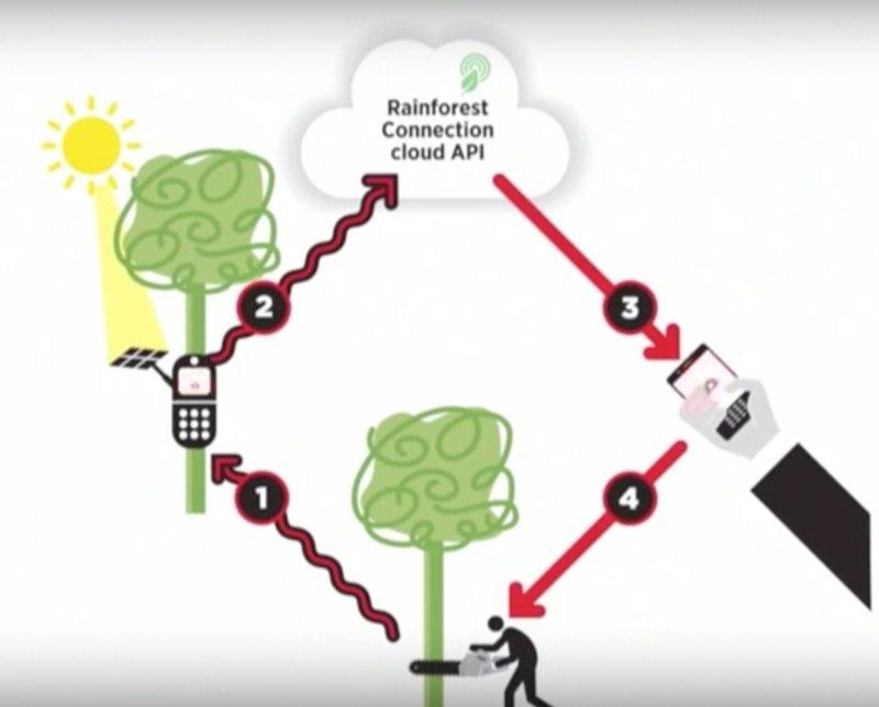 Un sistema para salvar los bosques usando smartphones viejos