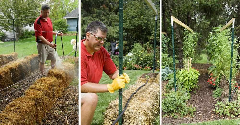 Cómo cultivar tomates en balas de paja en tu jardin