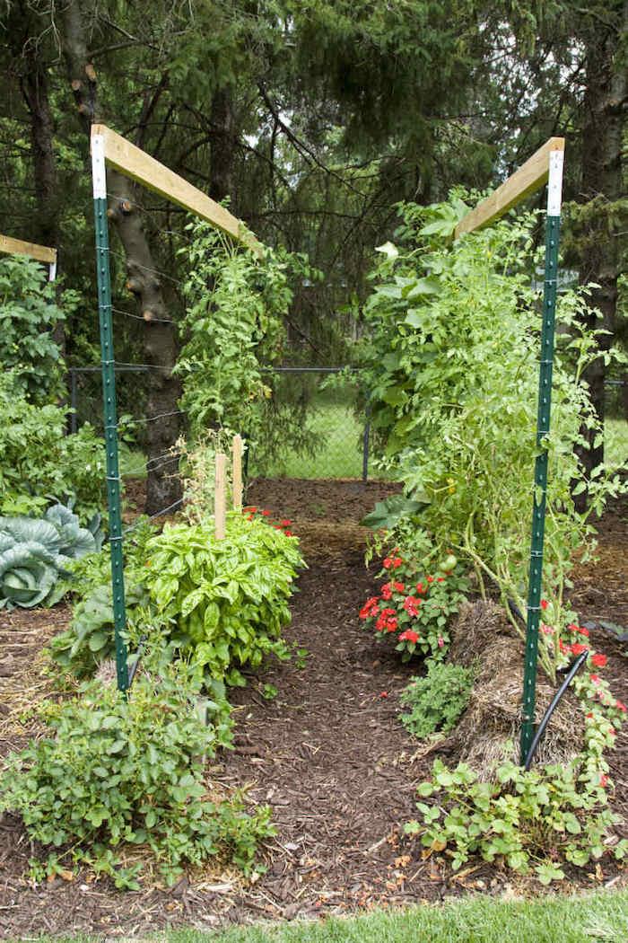 Cómo cultivar tomates en balas de paja4
