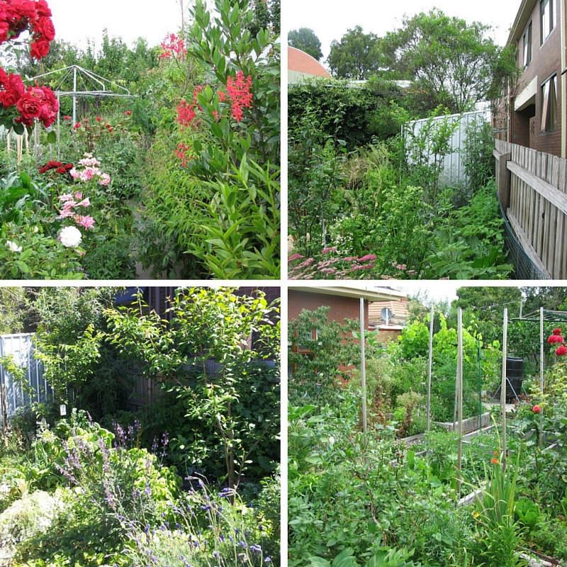 Angelo Eliade huerto jardin