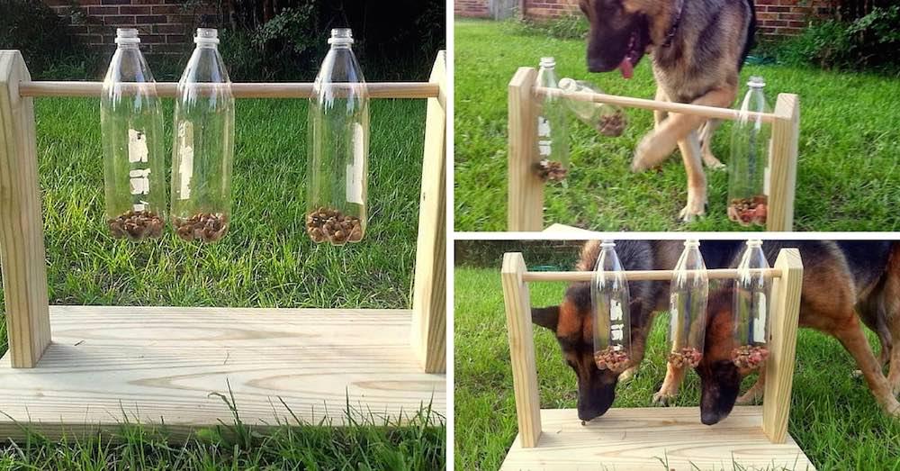 Como hacer un comedero juguete para perros con botellas de for Construir piscina para perros