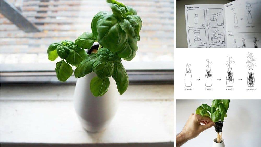 kit de cultivo hidropnico para cultivar plantas en casa