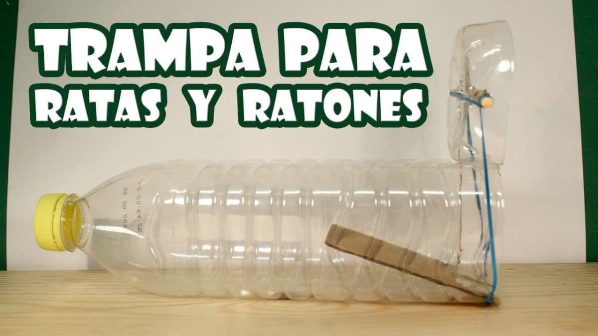 C mo hacer una trampa para ratones con una botella de pl stico - Trampas para cazar ratas ...