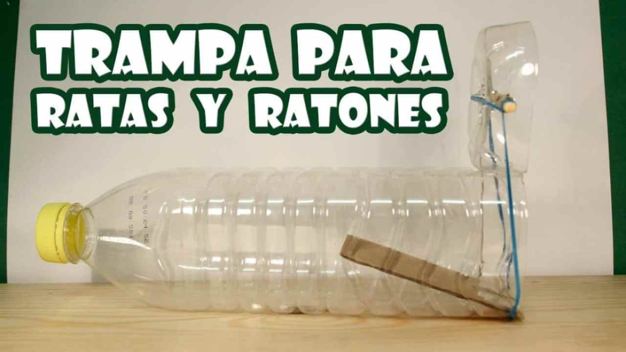 C mo hacer una trampa para ratones con una botella de pl stico - Cepos para ratones ...