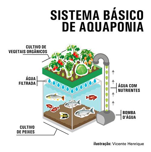 Acuapon a la simbiosis perfecta entre el cultivo de for Cria de peces en casa