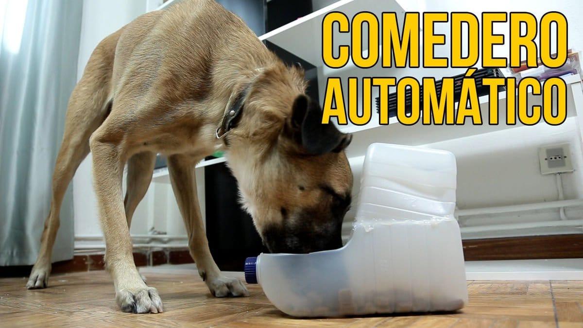 C mo hacer un comedero autom tico para perros for Construir piscina para perros