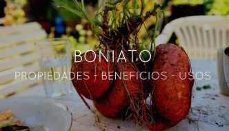 Propiedades, beneficios y usos del Boniato