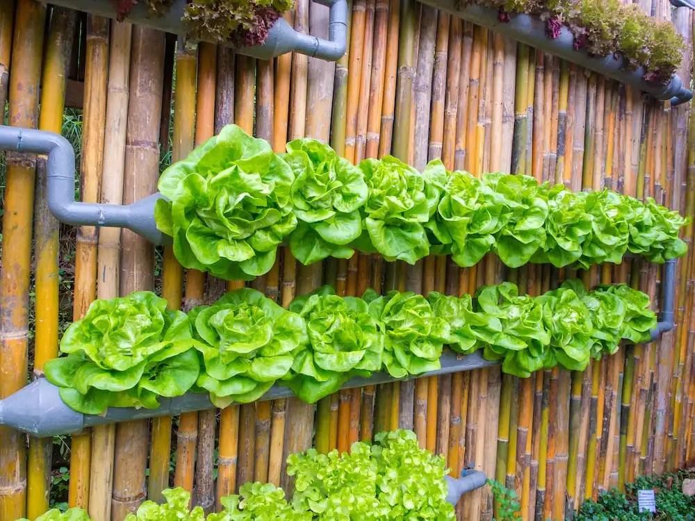 7 beneficios de tener un jard n o huerto vertical en casa for Como se construye un jardin vertical