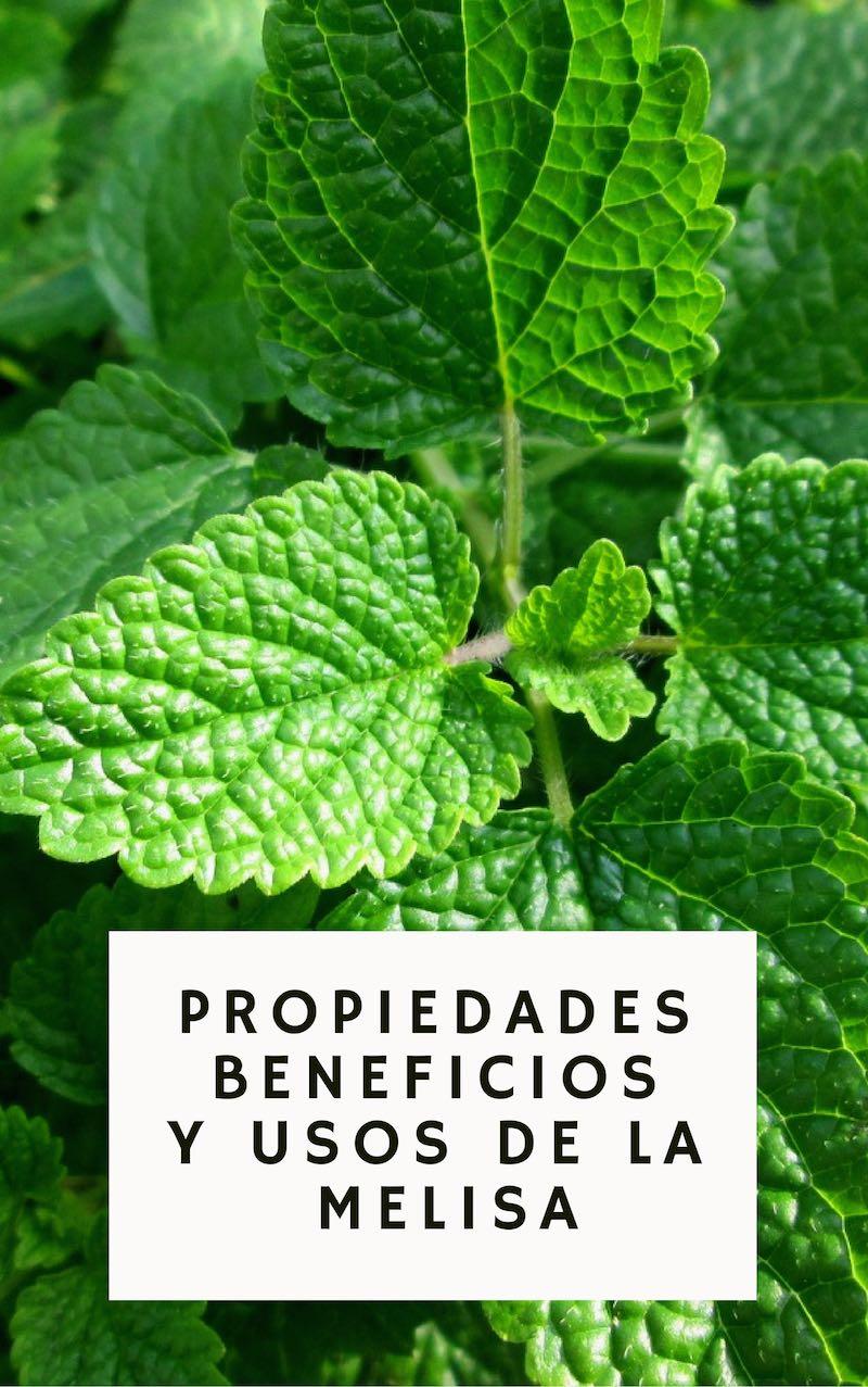 Agroa los grandes beneficios y propiedades medicinales - Planta de melisa ...