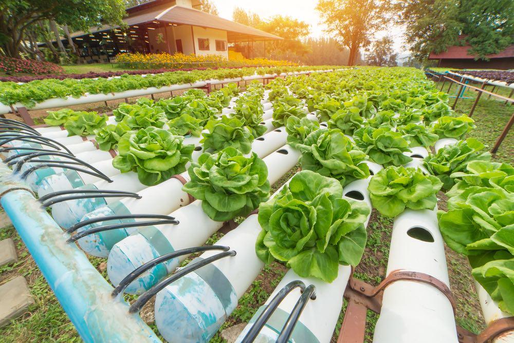Qué es el cultivo hidropónico