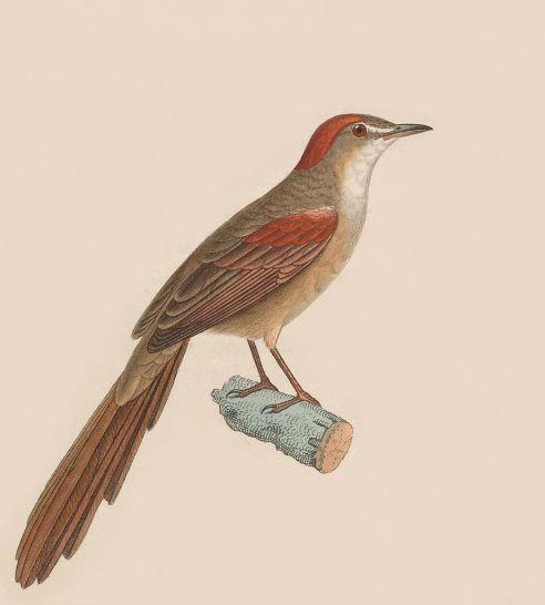 Ilustración (1830).