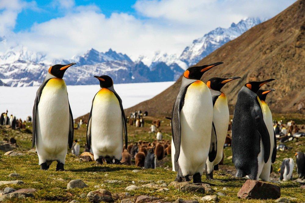 Antartide, sfiorati i 19°. +1° rispetto al 2015