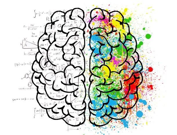 Mythe cerveau gauche droit