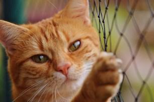 cat-1044750_960_720