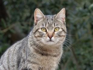 cat-2062223_960_720