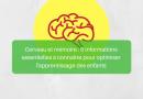Cerveau et mémoire : 5 informations essentielles à connaitre pour optimiser l'apprentissage des enfants