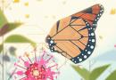 Un film d'animation pour montrer le lien entre la géométrie et la nature