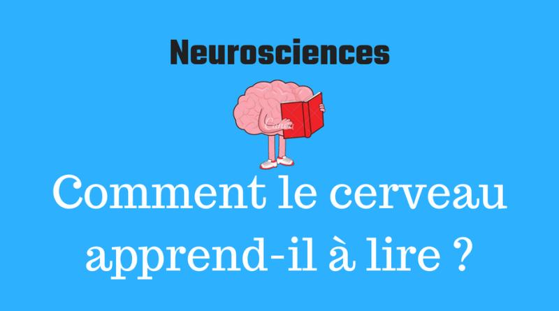 Comment le cerveau apprend-il à lire ?