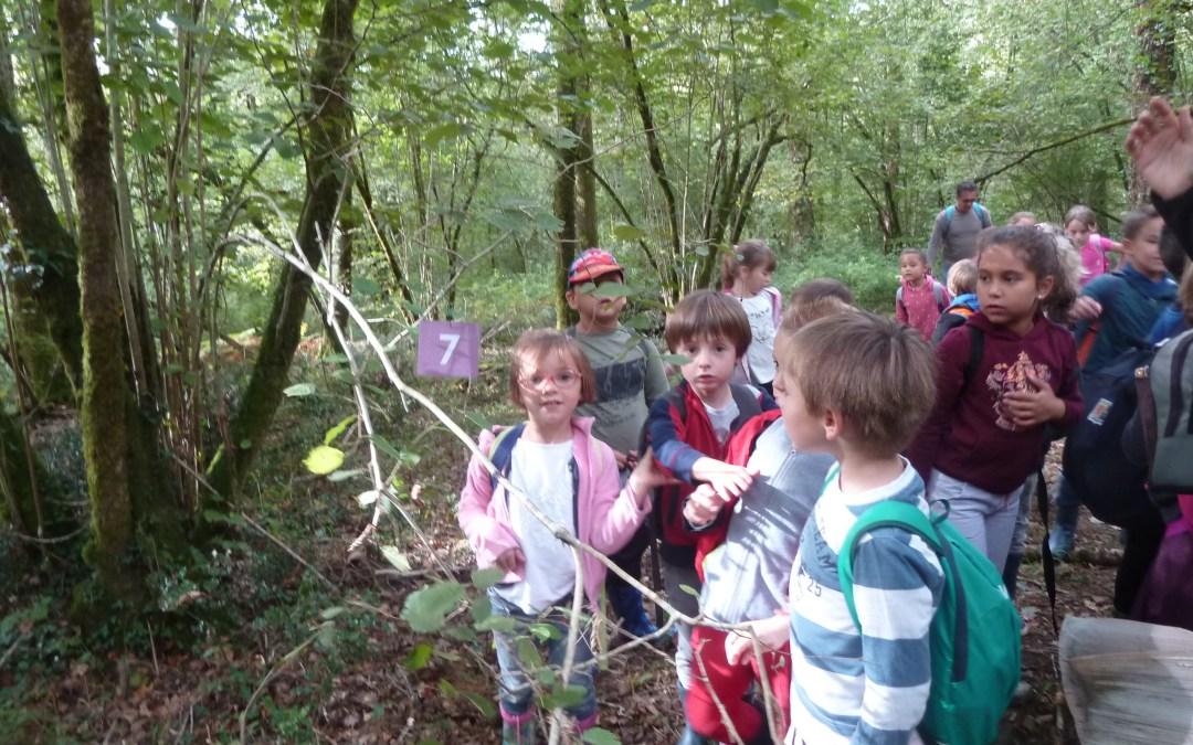 Projet nature : la forêt d'Ustaritz