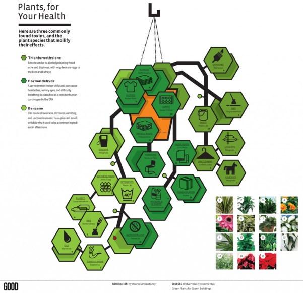 plants-for-iaq