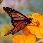 image: Outdoor Garden Containers attract beneficial pollinators.