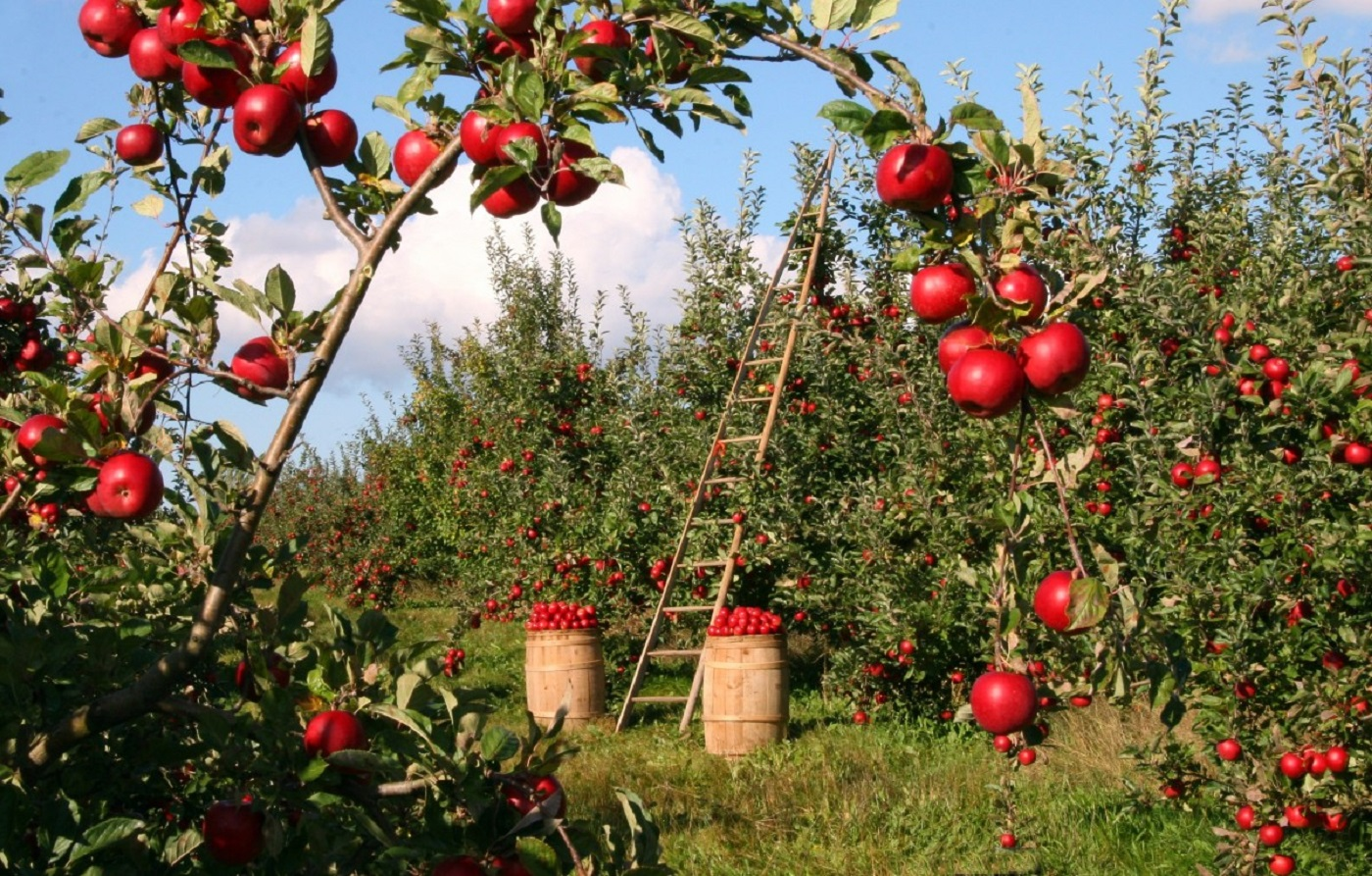 image: the edible landscape
