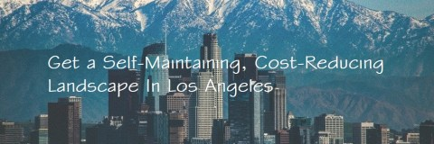 image: Landscape Design Services in Los Angeles