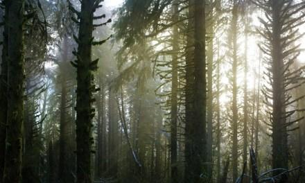 Duurzaam bosbeheer in de lessen integreren