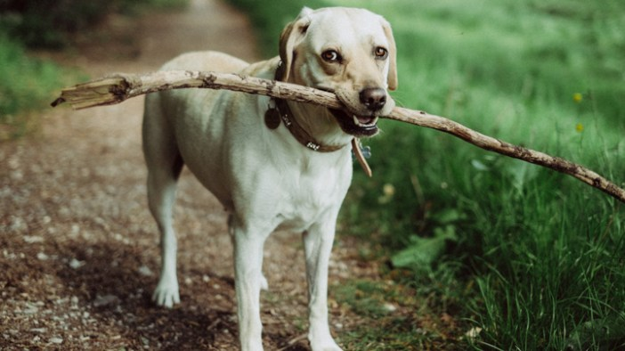 perros-juguetes-reciclados