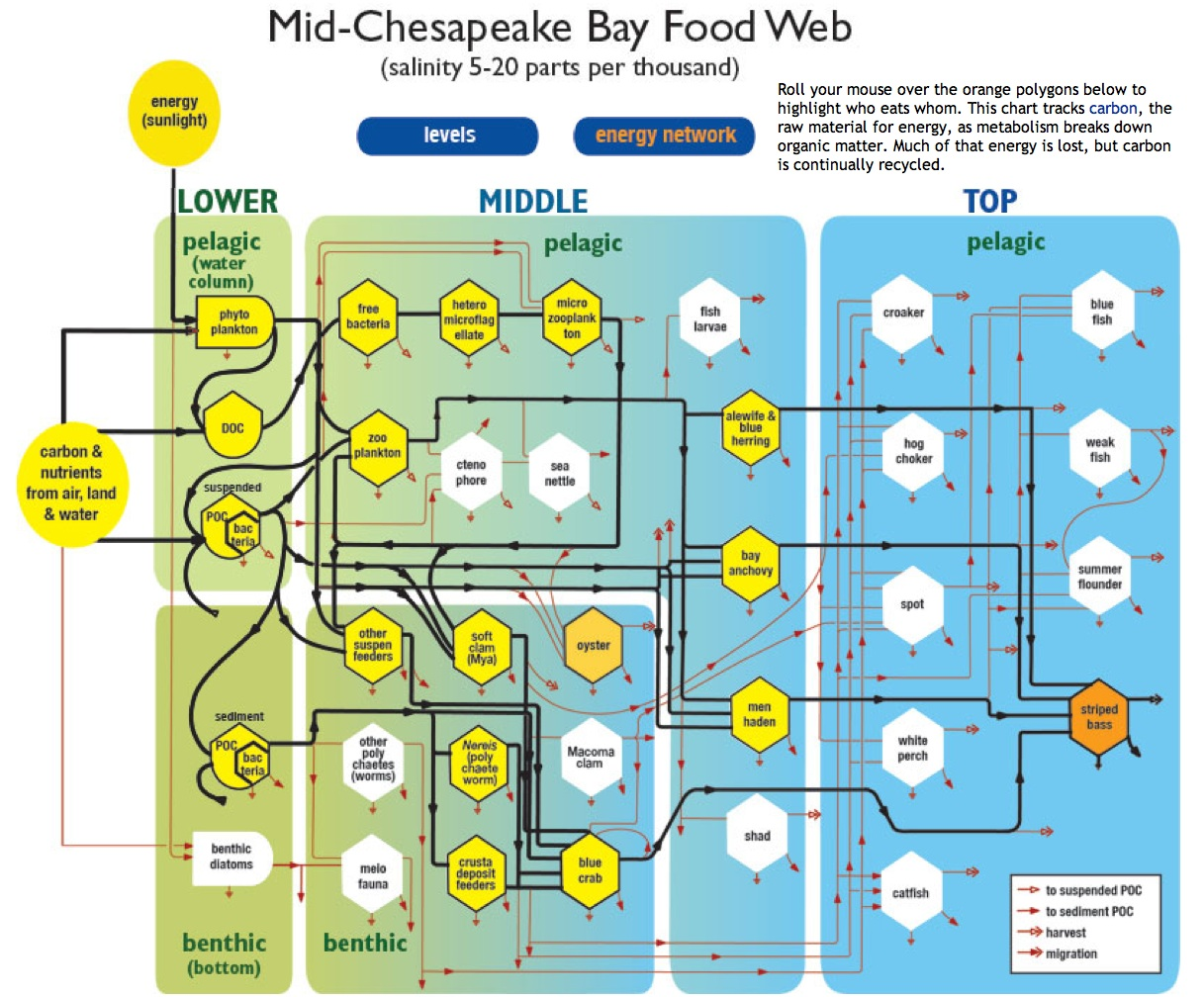 Chesapeake Bay Food Web Worksheet
