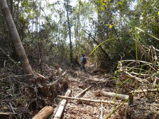 Illegal logging is a serious issue in peat swamp forests too