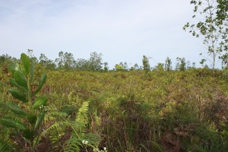 Highly degraded peatland after fire (photo: Andri Thomas)