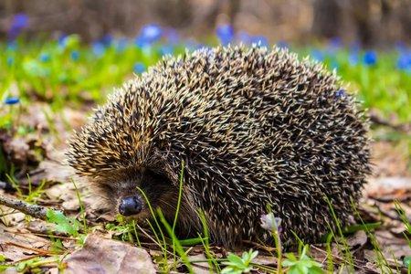 Животные мира, описание животных с названием и фото