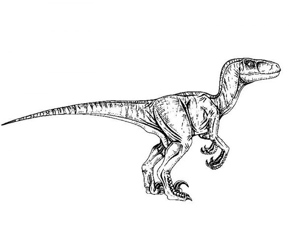 7 jurassic world coloring pages  ecoloringpage