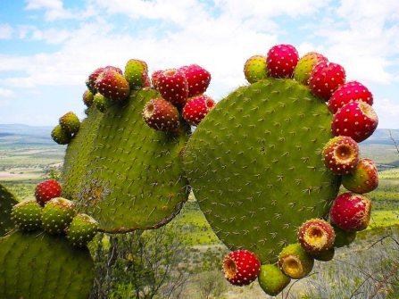 cosmetica-cactus-0