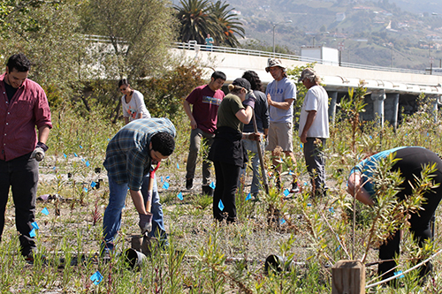 Student volunteers and interns planting native vegetation Malibu Lagoon - June, 2014.