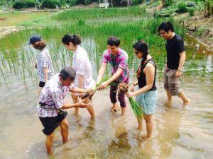 Organic rice farming activity with a muslim community in Bangkok