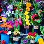 flowers-1384623_960_720